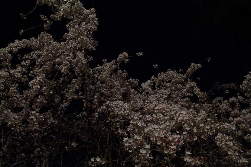 京都御苑、2