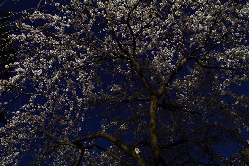 京都御苑、3