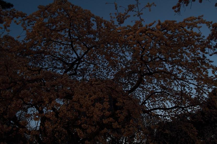 京都御苑、4