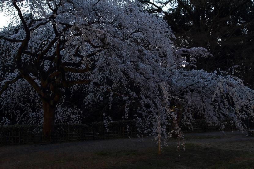 京都御苑、6