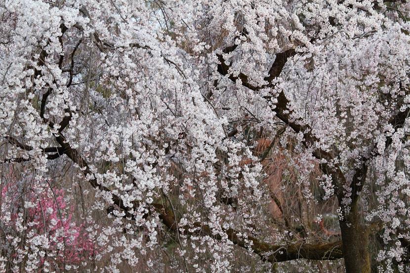 京都御苑、8