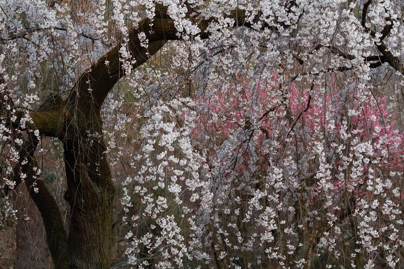 京都御苑、9