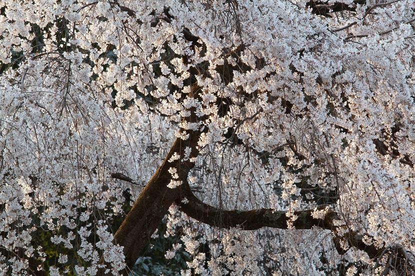 京都御苑、10