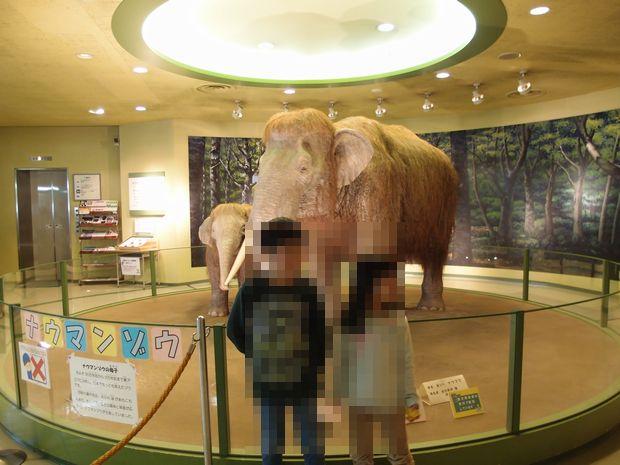 倉敷市立自然史博物館①
