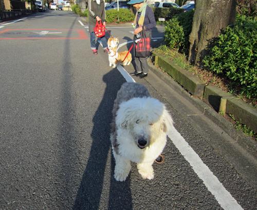 お散歩の友