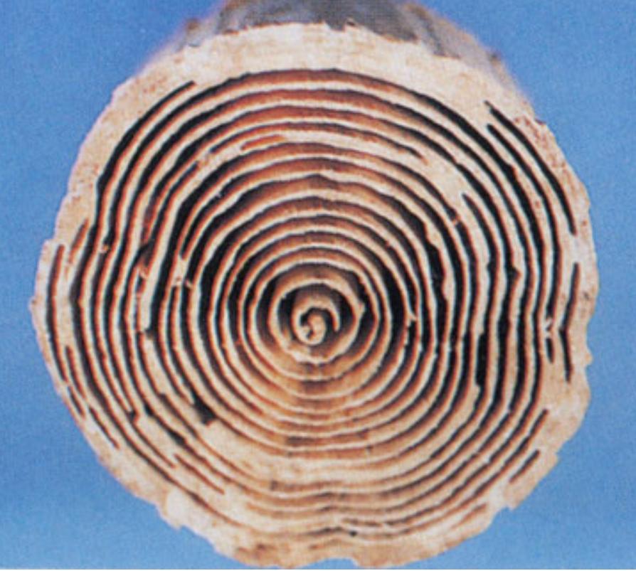 シロアリに食べられた材木