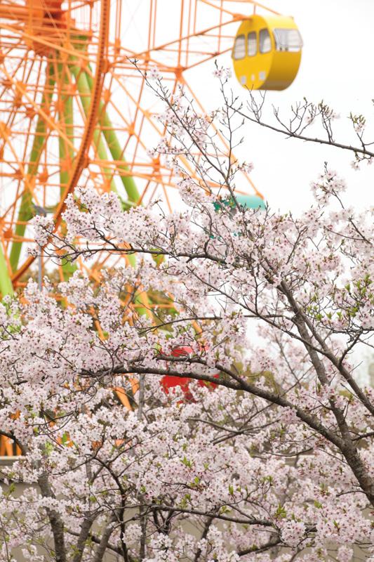 20160403延命公園 (53)のコピー