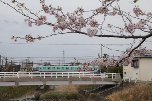 20160403堂面川 (135)のコピー