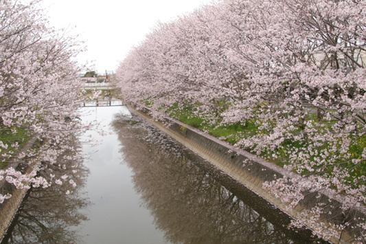 20160403堂面川 (154)のコピー