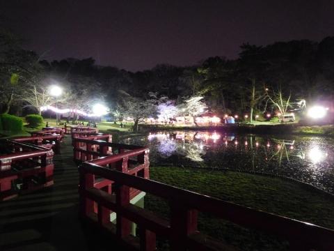2016年城址公園桜