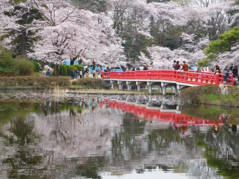 桜と八つ橋 2