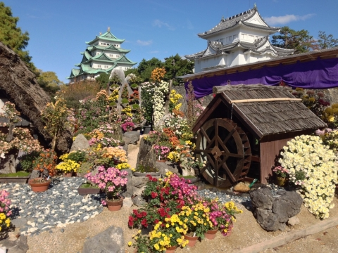 菊祭りの名古屋城
