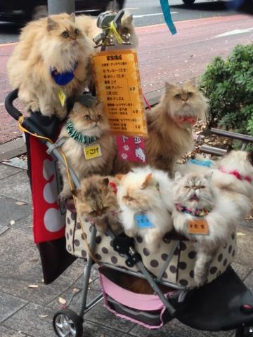 猫散歩の猫ちゃんたち