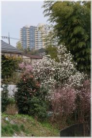 160320E 041春の花とFS23