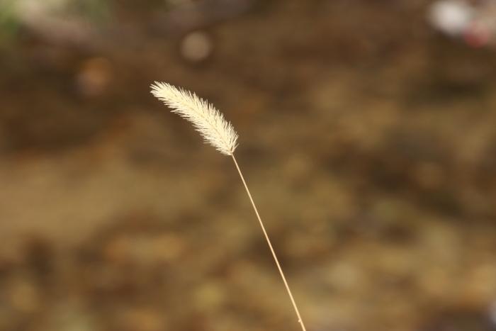 160402-mino-13.jpg