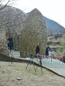 竹のドーム0316 (3)