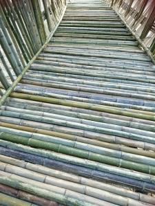 竹のドーム0316 (25)