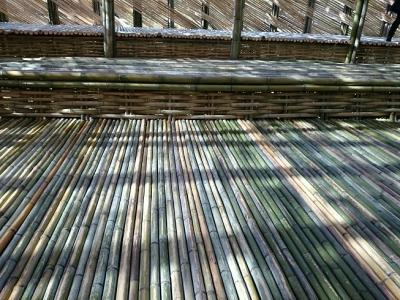 竹のドーム0322 (7)