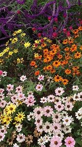 10月の庭②