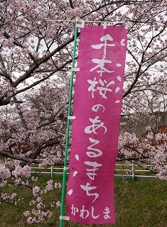 160403桜まつり
