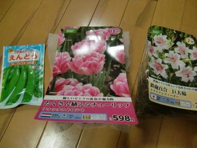春花壇の為に