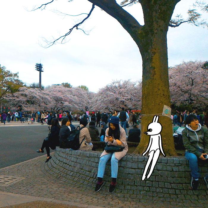 160411_sakura.jpg