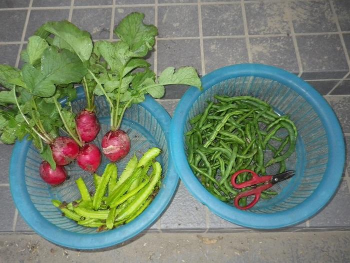収穫15_10_22