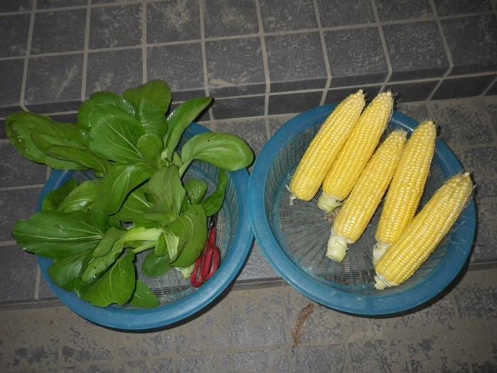 収穫15_10_29