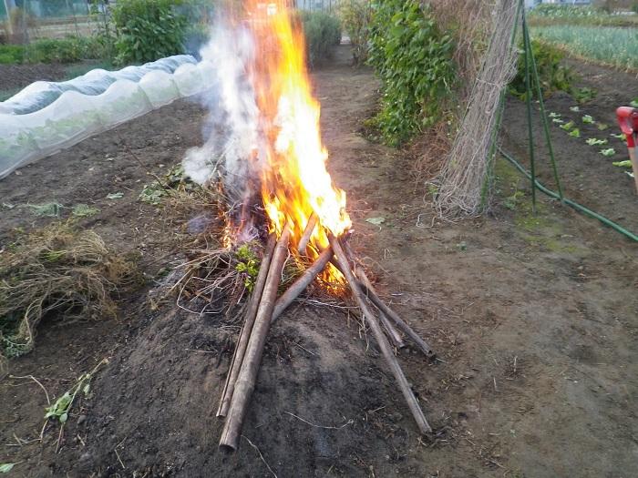 たき火15_11_01