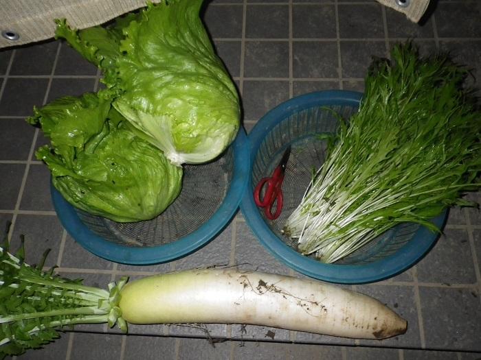 収穫15_11_06