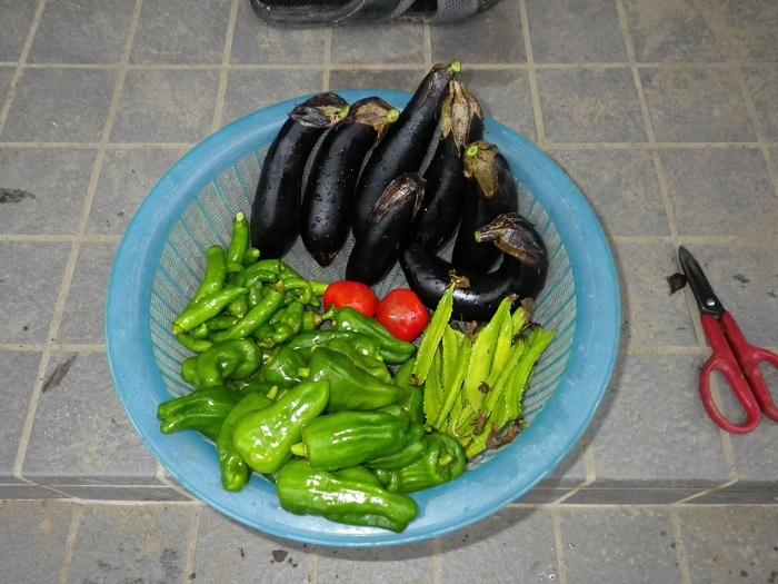 収穫1_15_11_08
