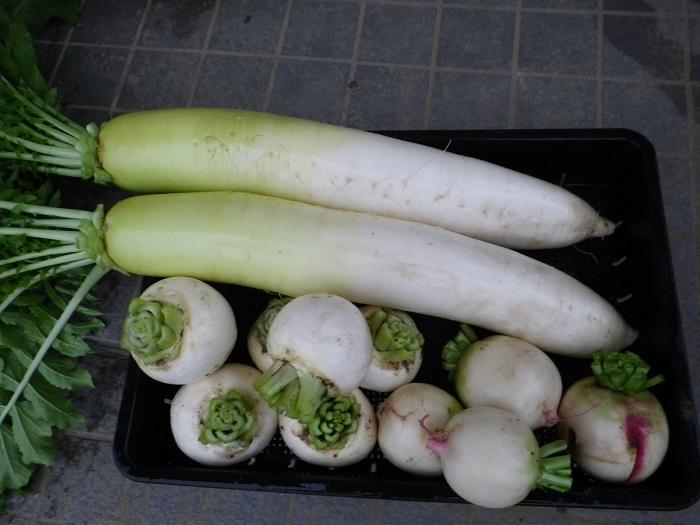 収穫1_15_11_14