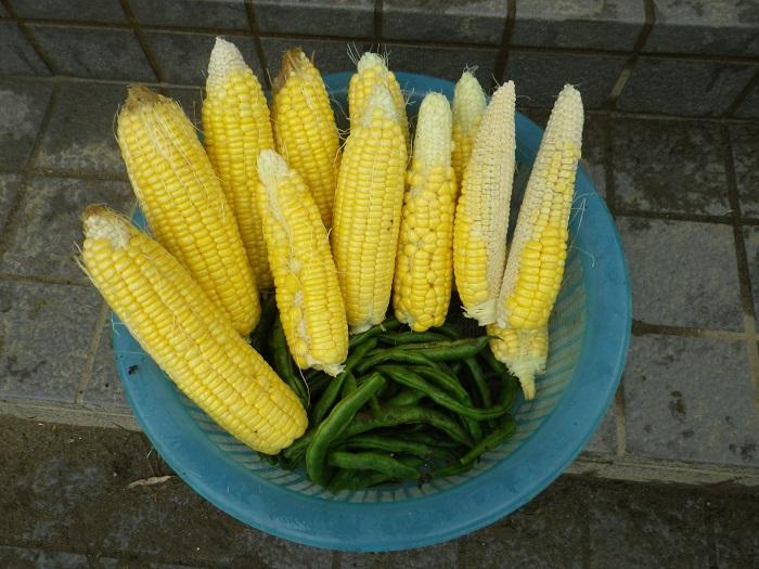 収穫3_15_11_14
