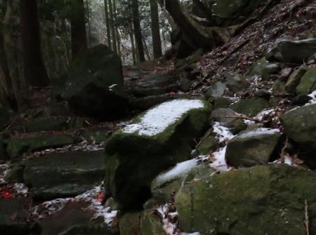多良岳マンサク 016