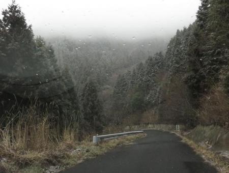多良岳マンサク 003