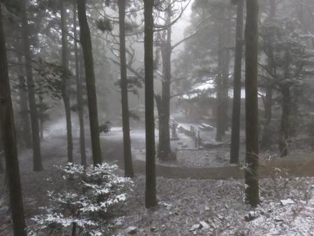 多良岳マンサク 033