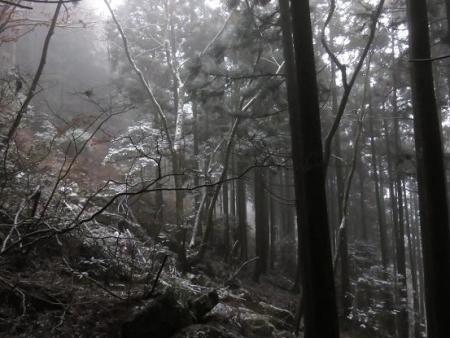 多良岳マンサク 029