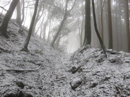 多良岳マンサク 049
