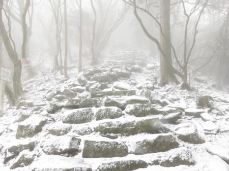 多良岳マンサク 061