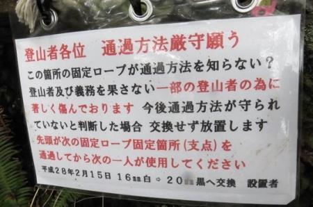 多良岳マンサク 076