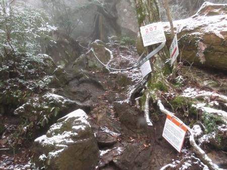 多良岳マンサク 075