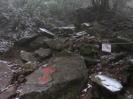多良岳マンサク 072