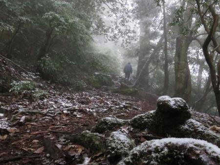 多良岳マンサク 068