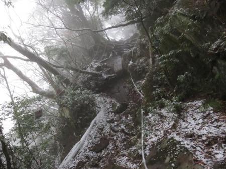 多良岳マンサク 079