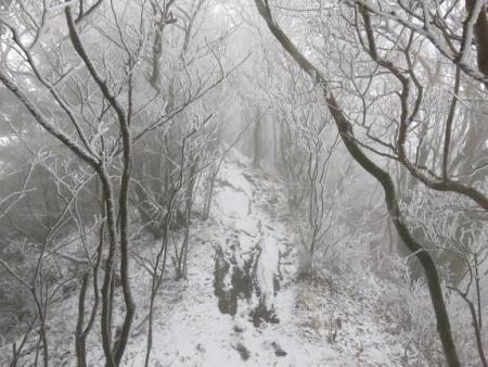 多良岳マンサク 090