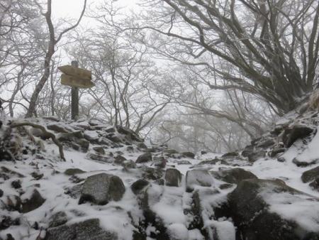 多良岳マンサク 086