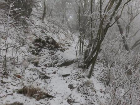 多良岳マンサク 088