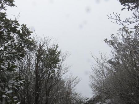 多良岳マンサク 103