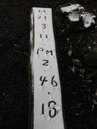 多良岳マンサク 143