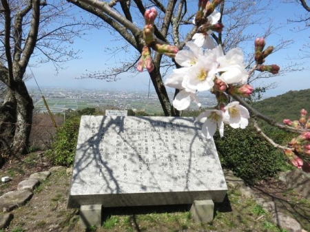 女山竹屋の桜 140